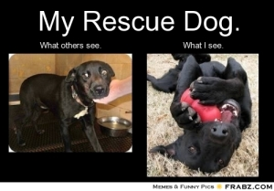 frabz-My-Rescue-Dog-What-others-see-What-I-see-6e0f69